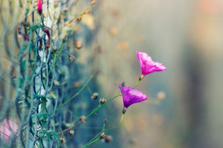beautiful-bloom-blooming-108303